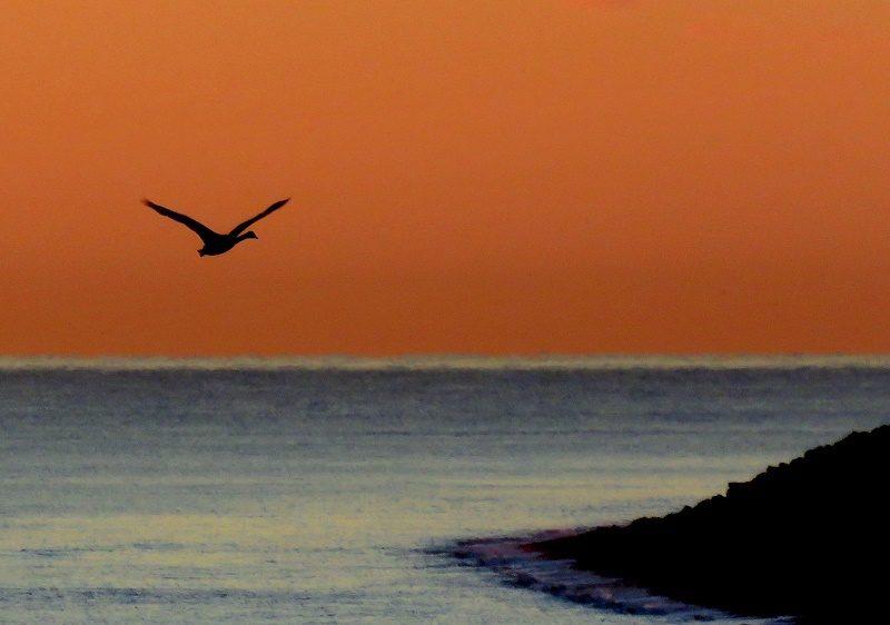 Swan Sunrise 29NOV16 Brian Keeley