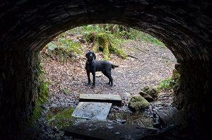 5b8666e00c9 Bellevue Woods  Tunnel of Love…
