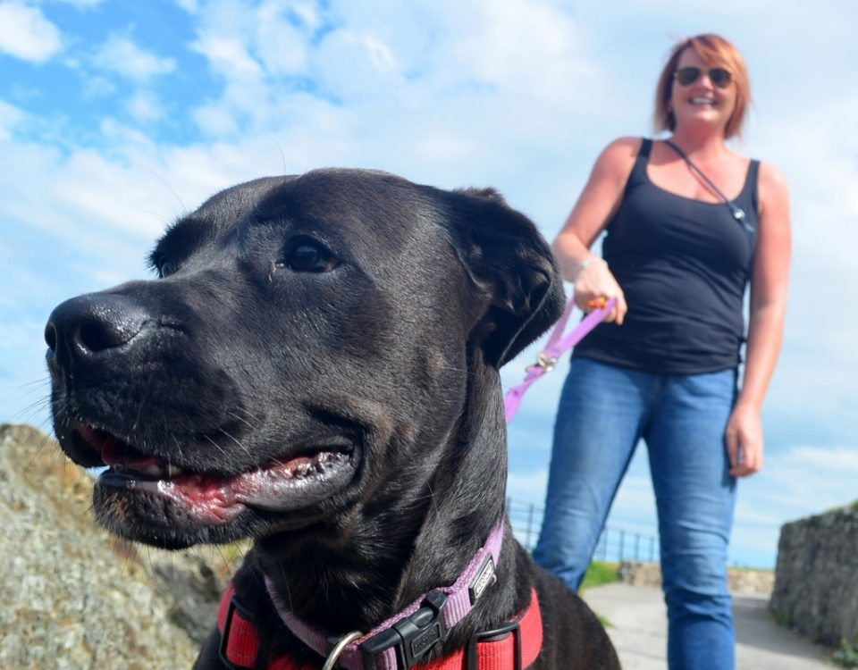 Non-Humans of Greystones  44  Minnie 525b06b83da7