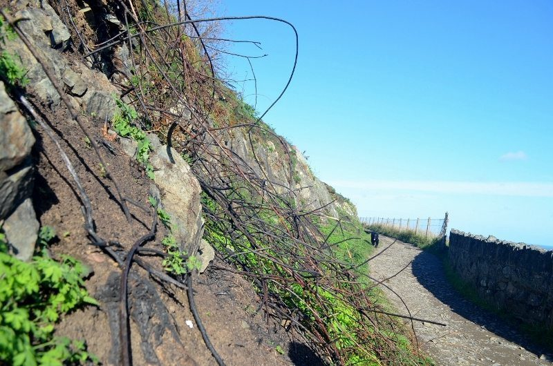 bus-out-of-bray-cliff-walk-18oct16-13