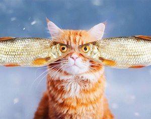 cat-fish-eyes-photography-food-pets