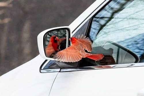 GotoShop Car Secondary View Mirror Side Blind Spot Rear View Mirror for Car Bus Taxi