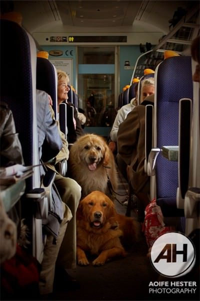 Dogs On A Train Aoife Hestor Kick Up The Arts Oct 2015