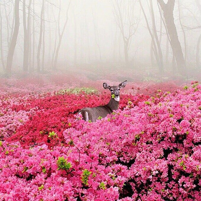 deer nature pink flowers
