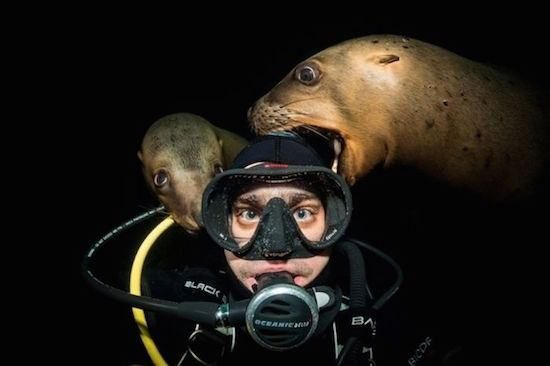 seal dive underwater ron harbour