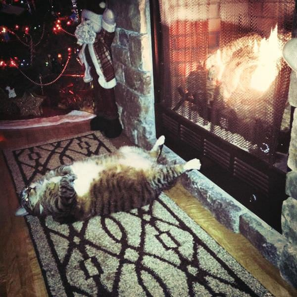 winter cold fire cat indoors stove warm snow xmas